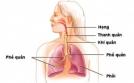 Hen phế quản tàn phá hệ hô hấp như thế nào ?
